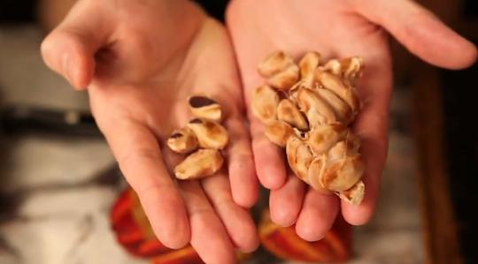 Raw Cacao Seeds